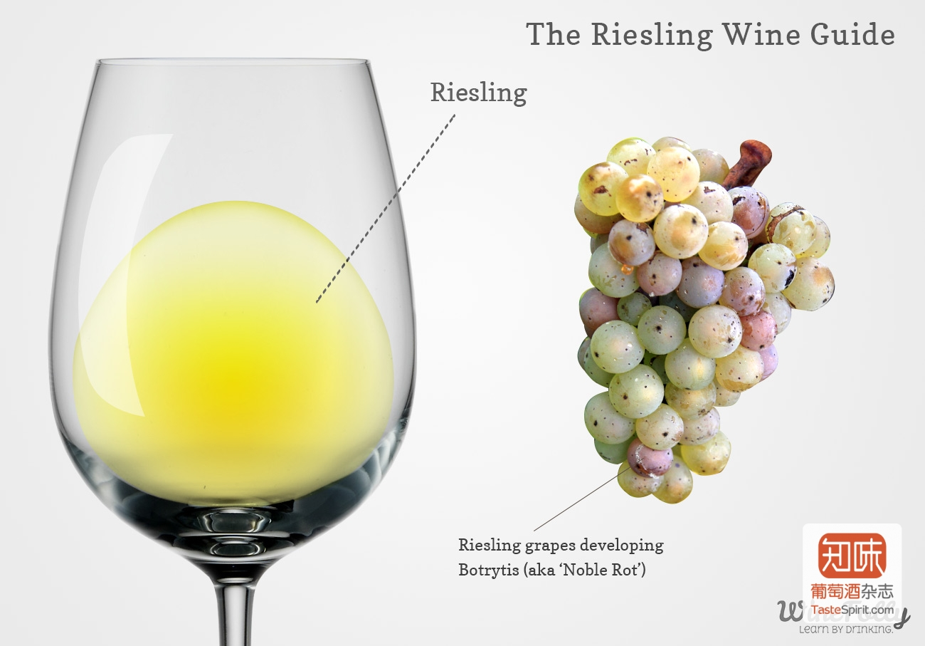 riesling-wine-in-a-glass-with-grapes