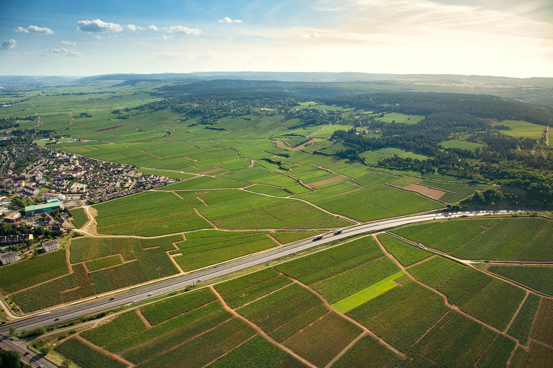俯瞰Beaune村的葡萄园,图片来源:Albert Morot