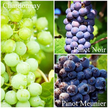 香槟地区的三个核心品种,图片来源:Wine2Go App