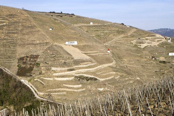 罗帝丘 Côte Rôtie的葡萄园大多在陡峭的山坡上,来源:vdltwine