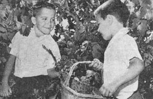 家族第三代传人,Peter的两个儿子,Marc 和 Peter Jr.小时候