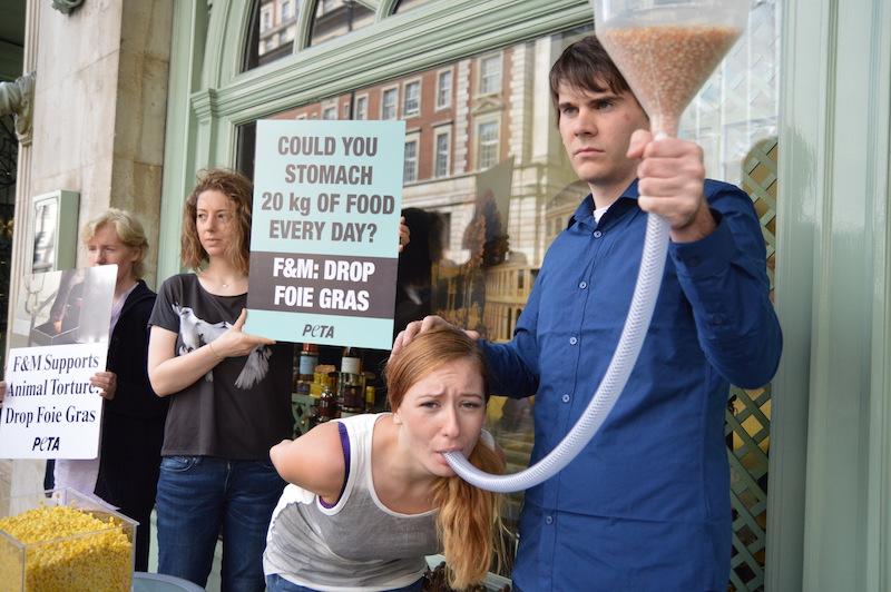 动物保护团体游说抵制肥鹅肝生产