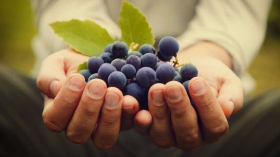 grape-in-hand