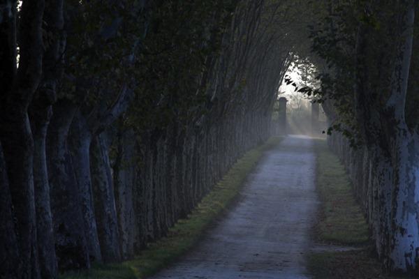 清晨的葡萄园被穿越森林而来的雾气笼罩,来源:Guiraud Magazine