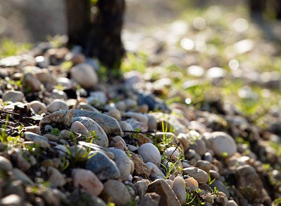 博雅克的土壤