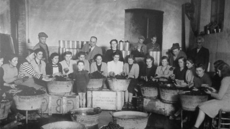 二十世纪初的松露清洗厂