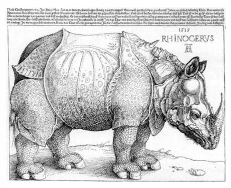 《丟勒的犀牛》,由阿尔布雷希特·丢勒绘制,画家其实从未见过真的犀牛