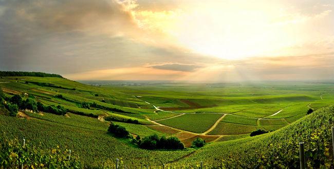 香槟地区拥有丰富多样的风土