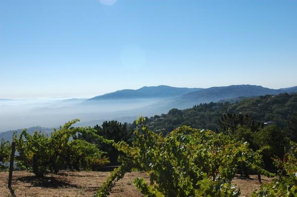 山脊庄园(Ridge Vineyards)丽山葡萄园(Monte Bello)的景色,来源:Ridge Vineyards