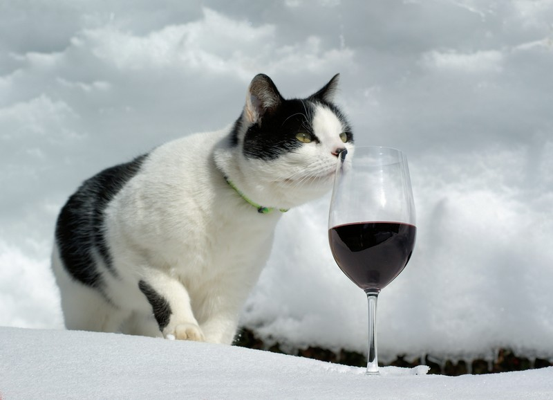 ops_catwine_Jean-MarcLinderFlickrCC