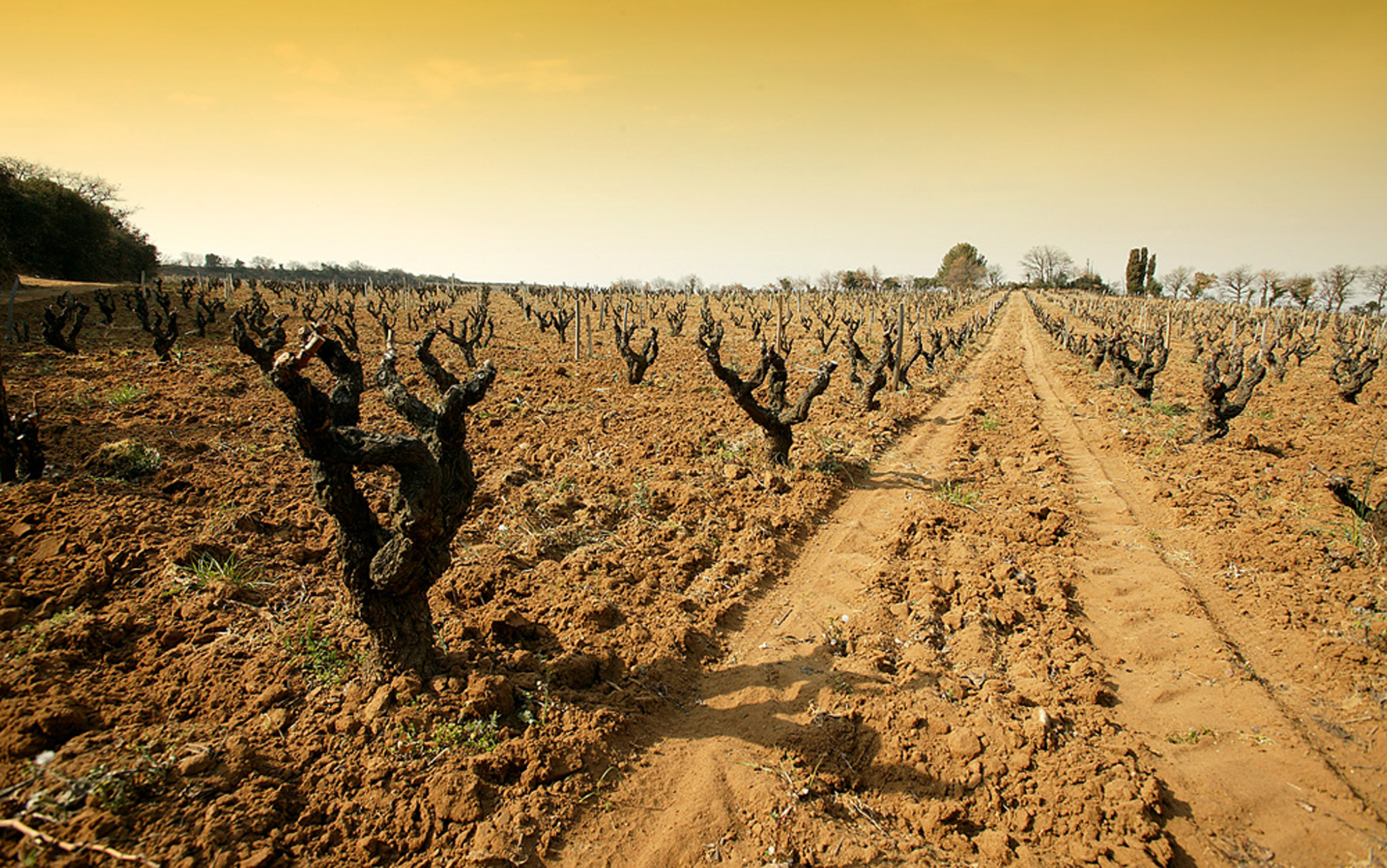 Rayas特别的沙质土壤