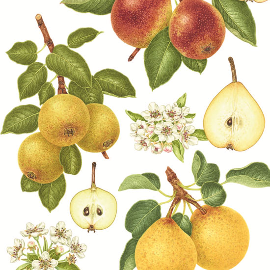 pear-varieties-sq-jpg