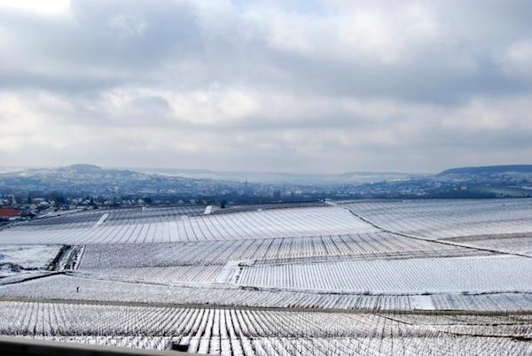 冬日的香槟葡萄园,图片来源:Louis Roederer