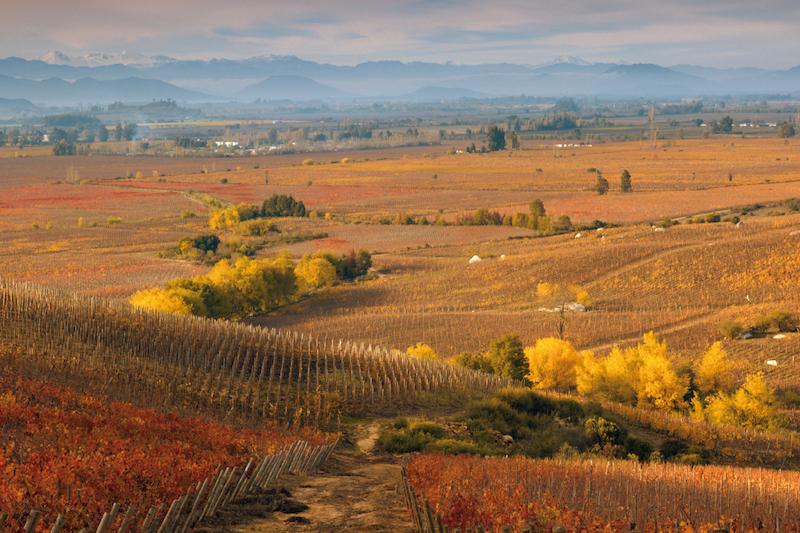 """智利也被称为""""山与葡萄园之国"""",图片来源:www.versant-sud.com"""