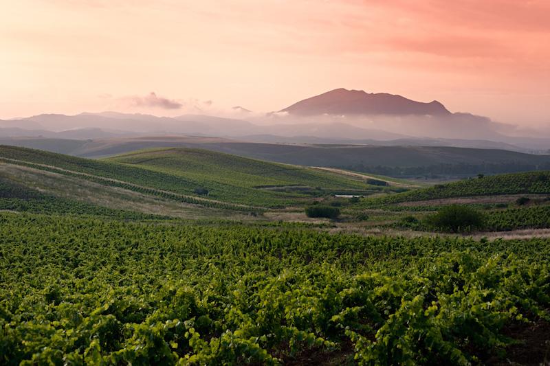 其实不止黑达沃拉,西西里岛出产的很多国际葡萄品种酿制的餐酒都有非常宜人的甜美风味。