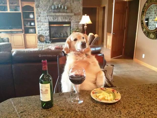 single-dog