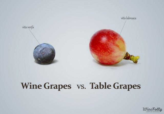 酿酒葡萄(左)与餐食葡萄(右)的对比,图片来源:winefolly