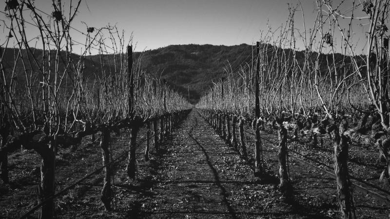 vineyard black white