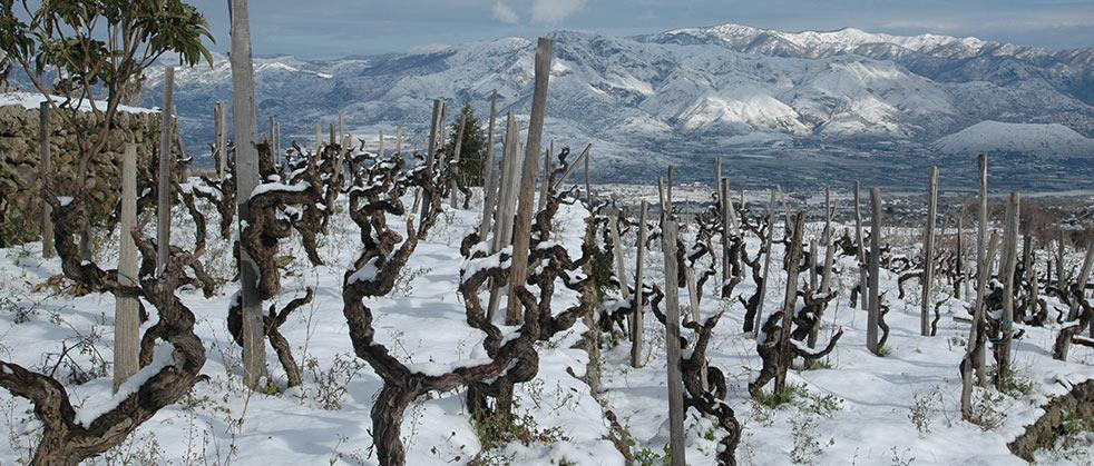 Terre delle Nere酒庄的老藤和葡萄园景色,来源:Tenuta delle Terre Nere