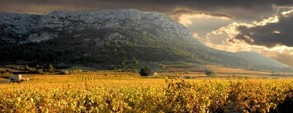 法国南部露西龙Roussillon近山的葡萄园
