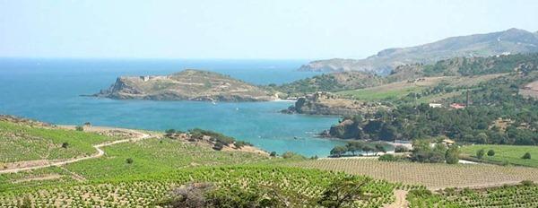 法国南部露西龙Roussillon临海的葡萄园