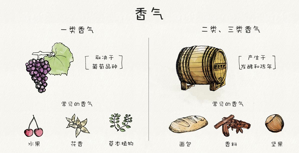 wine-aromas-vs-wine-bouquets
