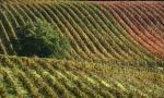 托斯卡纳葡萄酒:吸引全世界的目光