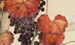 中国葡萄酒的崛起与反思(下):写在最后