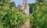 天然葡萄酒 Natural Wine:美女还是野兽?