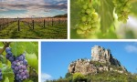 记WINE100葡萄酒大师班(一):新西兰与勃艮第金丘比较