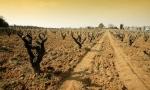 杰西斯·罗宾逊:哈雅丝酒庄 Chateau Rayas的百年孤独
