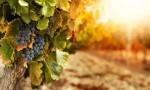 美国加州明星酒庄Silver Oak银色橡树&Twomey托美酒庄私享晚宴
