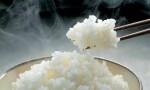 哪种米,才能煮出一锅完美的饭?