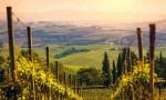 世界那么大,我想去看看那些最美的葡萄园