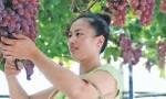 中国:崛起中的葡萄酒生产大国
