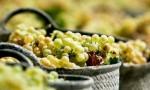 什么是有机葡萄酒?