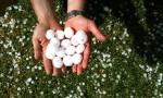 2013年波尔多冰雹灾害,损失预计达3亿欧元