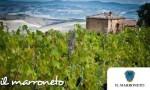 【视频】 全国直播庄主品鉴会:意大利顶级名家Il Marroneto