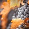 一支葡萄酒是怎么诞生的?(超多图)