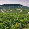 chablis-grand-cru-minerality-vineyard-10005107