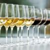 知味盲品入门课:各国经典白葡萄品种对比