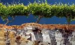 葡萄酒风土与土壤到底有什么关系?这位法国土壤专家道出了真意