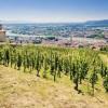 北京 | 罗纳河谷葡萄酒产区探索课程:纵横五百里,上下两千年