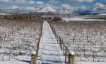 杰西斯·罗宾逊:名为希腊的葡萄酒国度