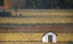 Paysage-de-Bourgogne-BIVB-ARMELLEPHOTOGRAPHE.COM_thumb.jpg