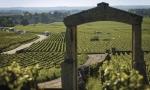 勃艮第年份指南:2009,红酒卓越非凡
