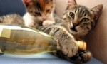 长相思的猫尿味儿