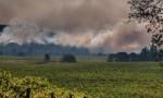 杰西斯·罗宾逊:火与烟,与日俱增的葡萄园不速之客