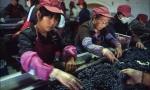 酒评家布尔奇:中国葡萄酒品质的飞跃