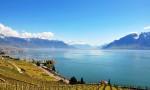 瑞士葡萄酒: 湖光山色间的纯净